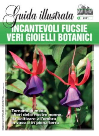 Incantevoli fucsie, veri gioielli botanici